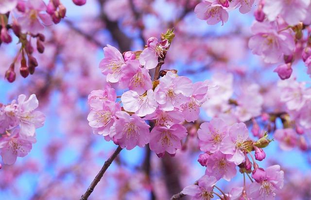 hoa đẹp nhất thế giới 2