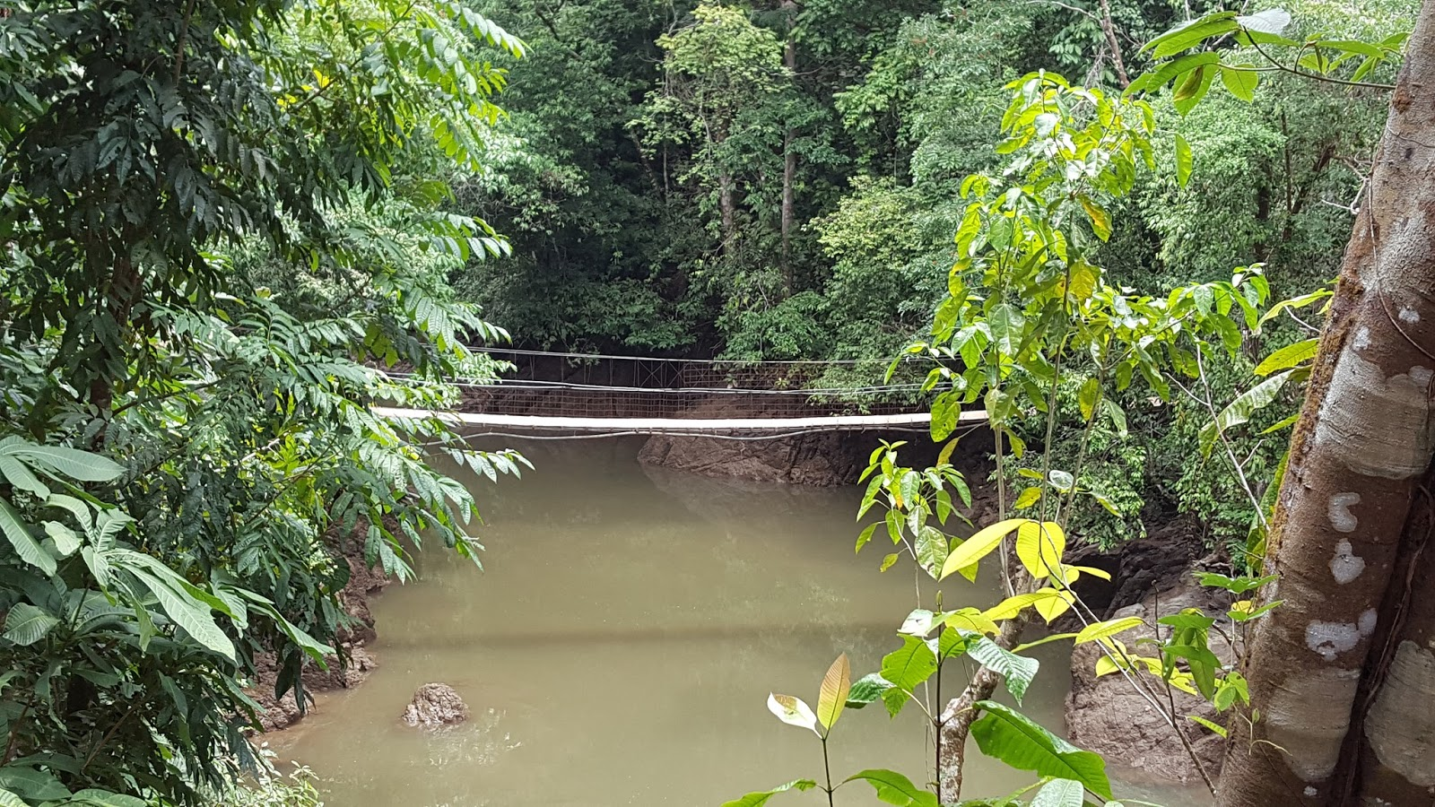 Swinging bridges in costa rica