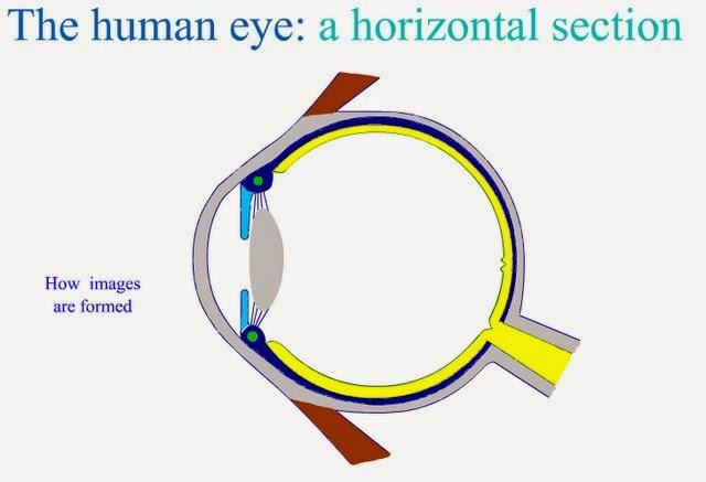 http://www.purchon.com/flash/eye.swf