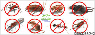 An insect control company in Jeddah, spraying pesticides in Jeddah