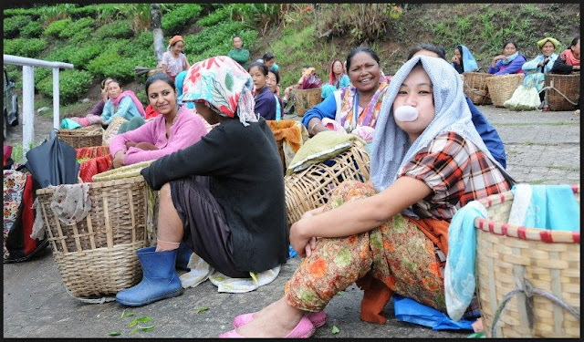 Tea workers in Darjeeling Hills