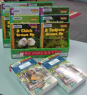 Books, arranged standing upright, front covers facing outward, in three-deep, two-wide, tiered display boxes. Library barcodes are in upper-left corner of each book. In the front row of the display boxes, the books' front covers are visible. The one on the left is 'A Chick Grows Up,' and it features two chicks on the cover. The book on the right is 'A Tadpole Grows Up' and its cover image displays a tadpole. In two parallel stacks in front of the tiered display boxes, are copies of 'Phillis Wheatley, Young Revolutionary Poet.' The cover image depicts a black-haired, brown-skinned woman in Colonial dress: White ruffled cap, orange shawl and long-sleeved blue dress with white apron.