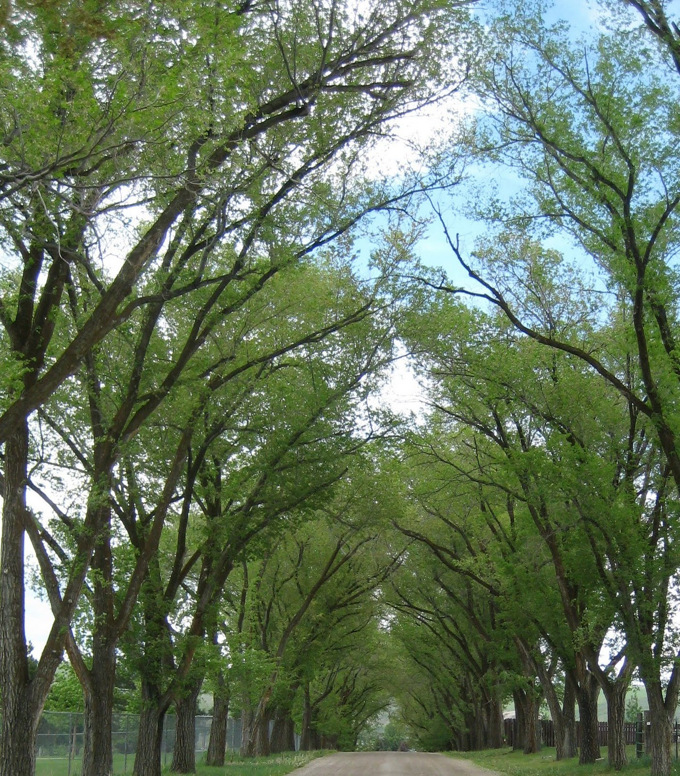"Tree-lined Road, Idaho, Image by LeAnn, as seen on linenandlavender.net, ""Inspired"" page:  http://www.linenandlavender.net/p/inspired-quotes-and-images.htm"