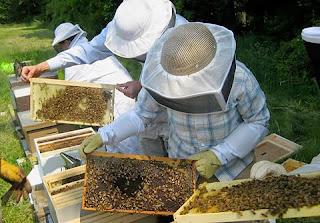 Δ/ΝΣΗ ΑΓΡΟΤΙΚΗΣ ΟΙΚΟΝΟΜΙΑΣ ΚΑΙ ΚΤΗΝΙΑΤΡΙΚΗΣ:Αντικατάσταση κυψελών και Οικονομική στήριξη της νομαδικής μελισσοκομίας για το έτος 2017