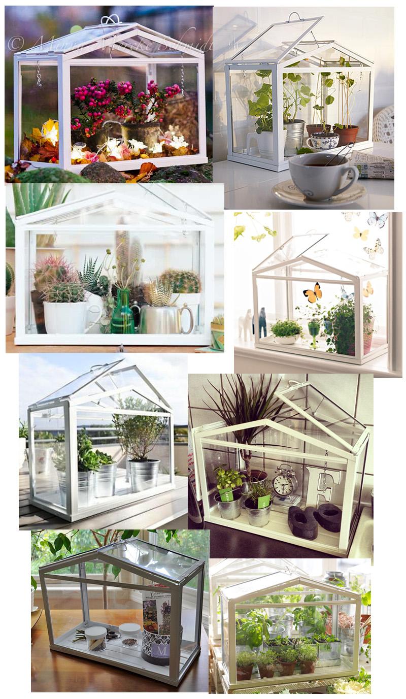 miss cosillass pon un mini invernadero en tu vida. Black Bedroom Furniture Sets. Home Design Ideas