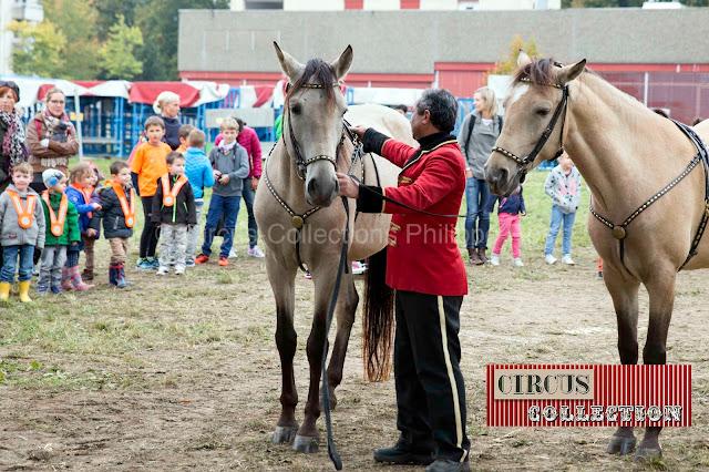 les chevaux du cirque harnaché par un palefrenier