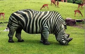 7 Animais híbridos que são incrivelmente reais