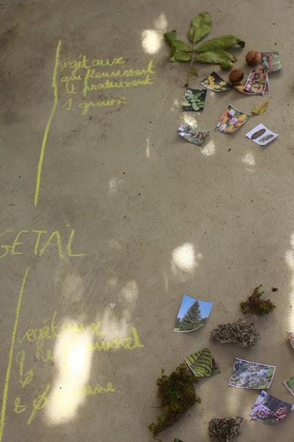 végétaux classification unschooling IEF blog planete parentage