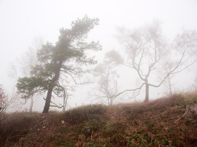 Nur wenige Bäume in der Gipfelregion