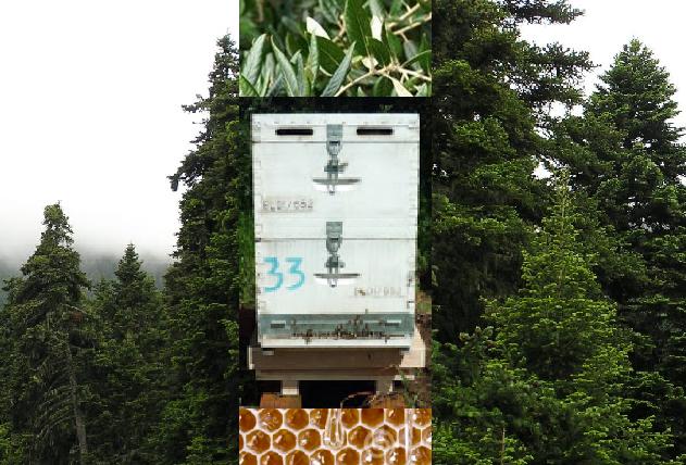 Τα νέα της ζυγαριάς της BeesScale στην Αριά και στον έλατο τον Ιούνιο!!!