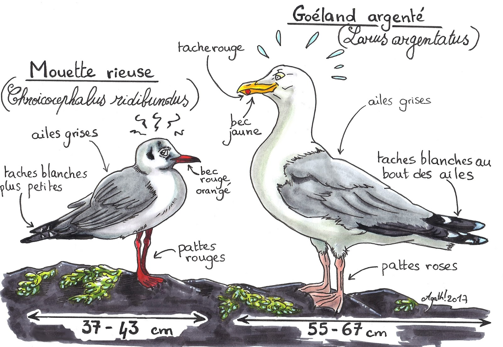 Le nid de pie mouette versus go land - Difference entre pyrolyse et catalyse ...