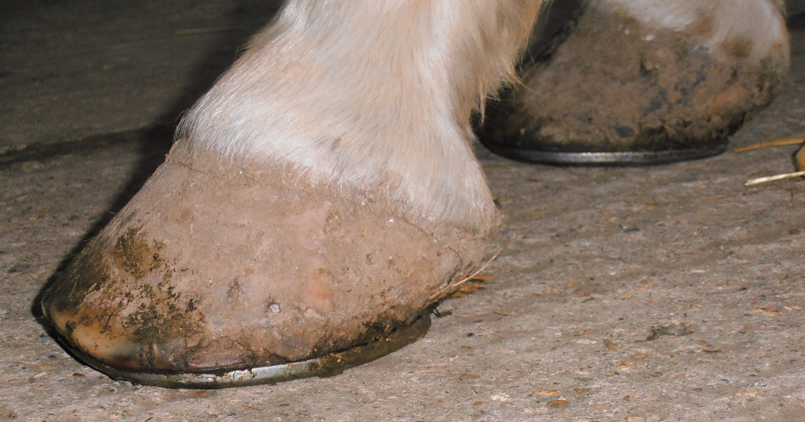 Why Horses Wear Shoes