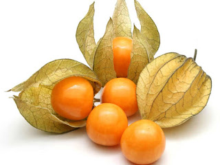 Physalis Fruit Pictures