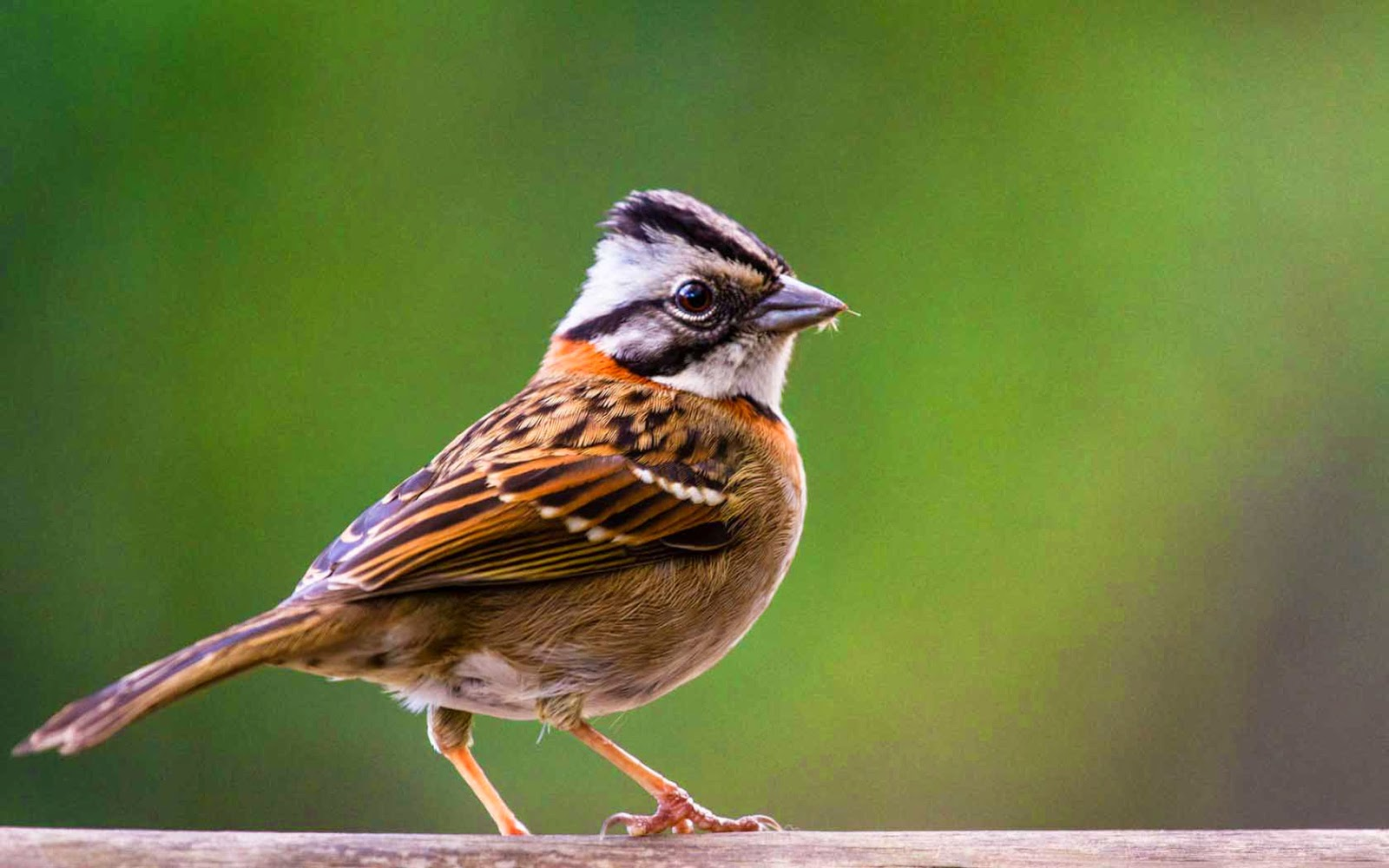Desktop Wallpaper With Tamil Quotes Lovable Images Cute Sparrow Wallpapers Hd Free Download