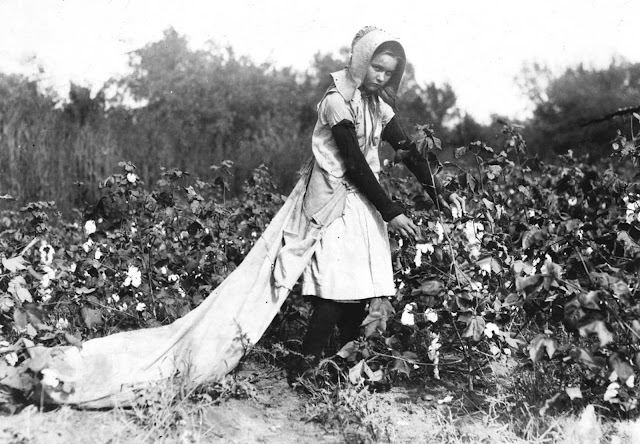 Callie Campbell, 11 years old, picks 75 to 125 pounds of cotton a day, and totes 50 pounds of it when sack gets full.