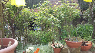 bahçe-çiçek-bahar