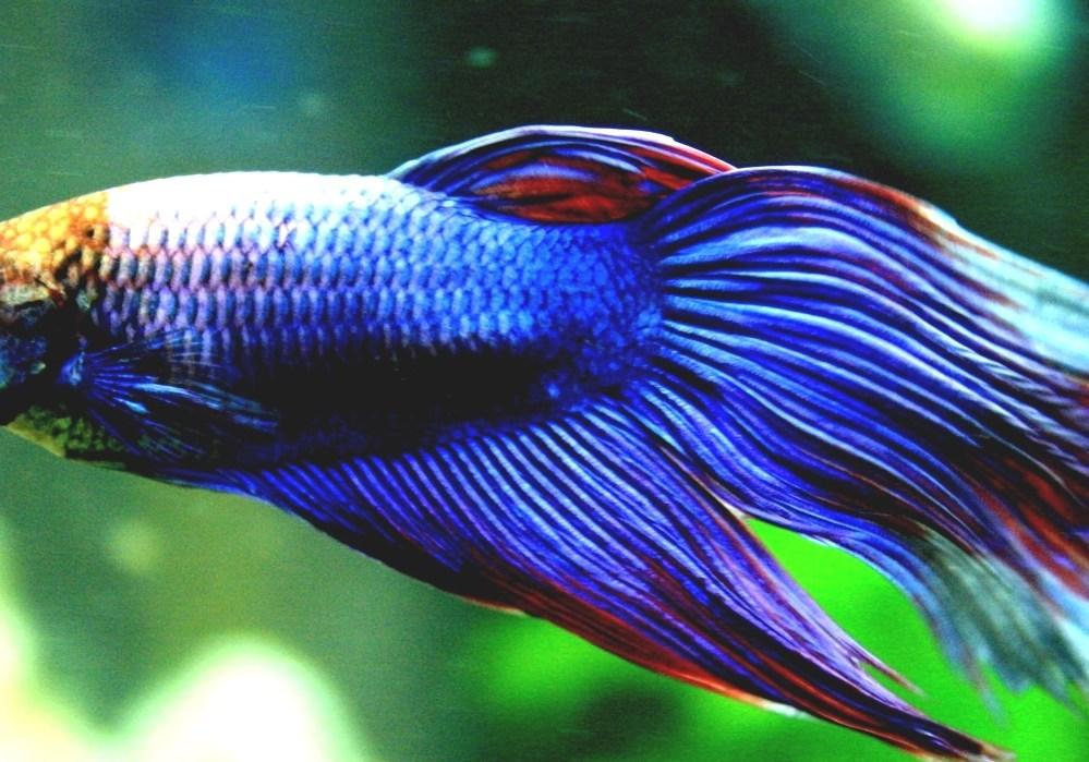 List Of Freshwater Aquarium Fish Species - Best Fish For ...