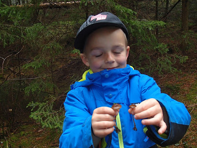 Szyszkówka świerkowa Strobilurus esculentus