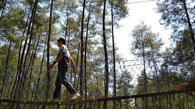 hutan pinus bendosari malang