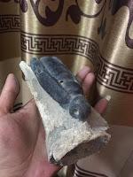 Fosil Bertuah Ratu Tawon Kumbang Griya Mustika