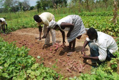 Federal Government set to employ 100,000 graduates into food production