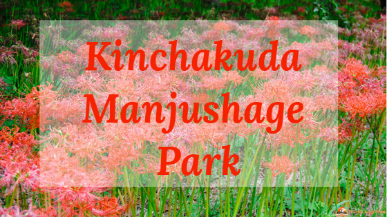 Kinchakuda Manjushage Park, Spiderlily, fioritura tokyo, fiori tokyo ghoul, fiori giappone, parchi giappone, red spider lily, kinchakuda park, kinchakuda red flower, red flower japan