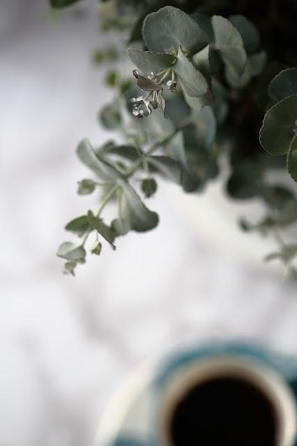eucalyptys, #kukkailottelua