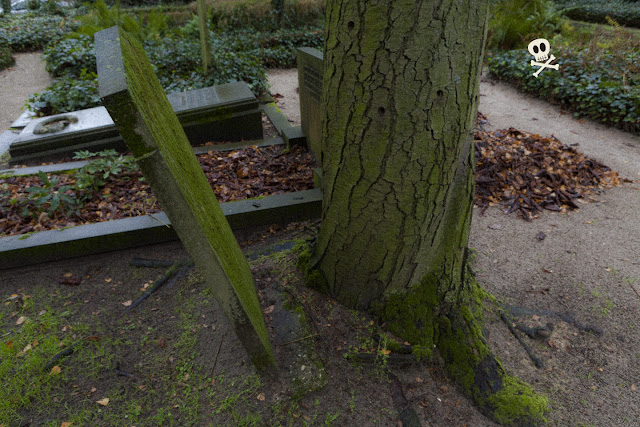 La raíces de un árbol siguen creciendo en Huis te Vraag