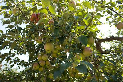 apple+orchard - Apple Orchard Photoshoot