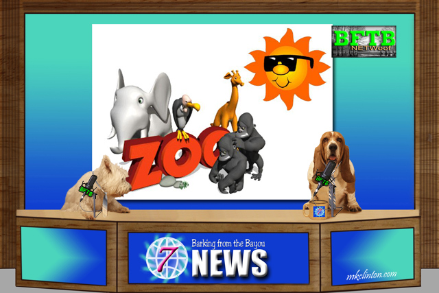 BFTB NETWoof News ~ zoo heat