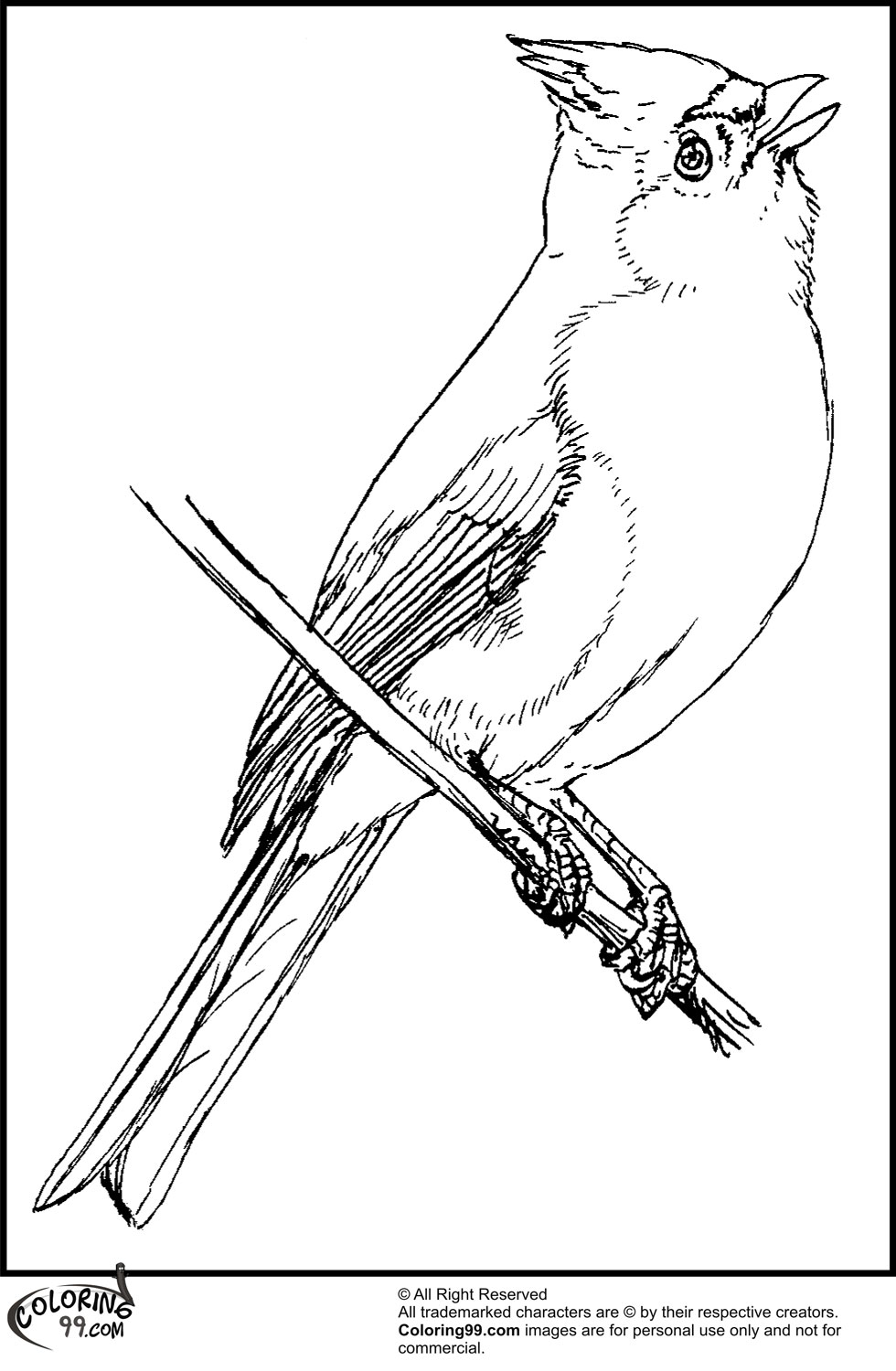 American Cardinal Coloring Pages