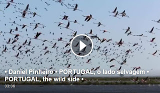 http://absolutoportugal.blogspot.pt/2015/10/em-flagrante-delito-surpreendida.html