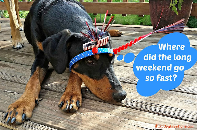 Dog wearing 4th of July headband