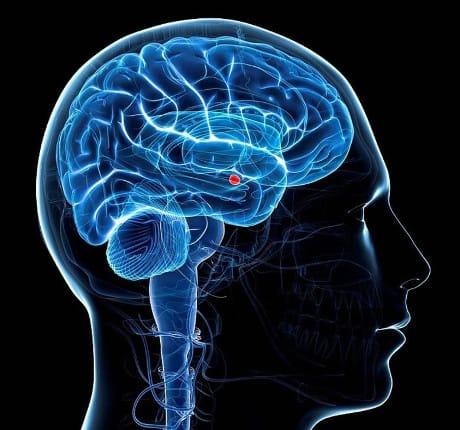 Scienziato scopre regione nascosta del cervello umano