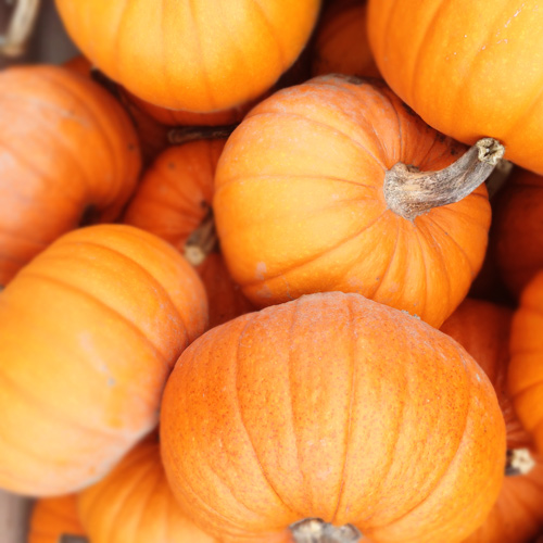 My Favorite Gluten-Free Pumpkin Recipes for Fall