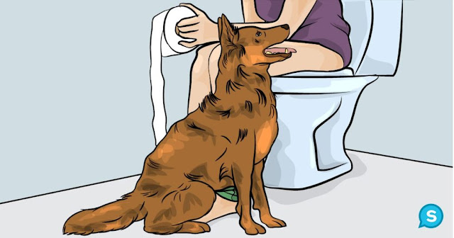 WATCH VIDEO: This Is Why Dogs Follow You Into The Bathroom. I Never Knew This!