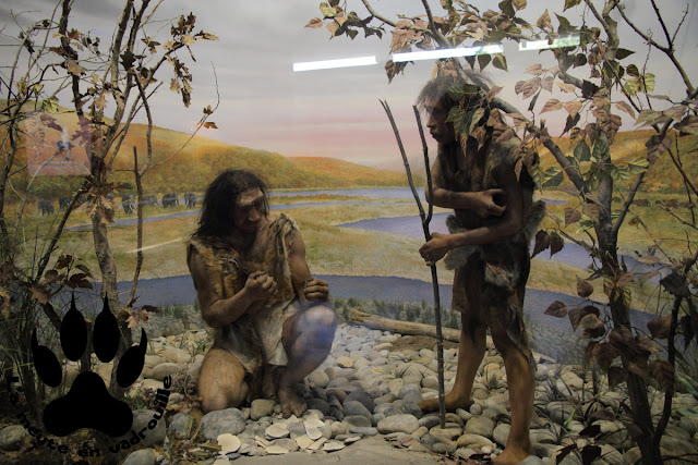 Homo-erectus-Provence