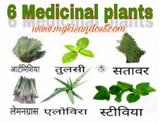 best medicinil plant farming