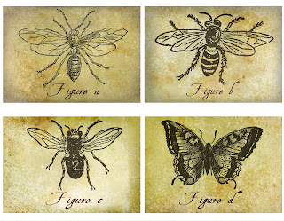 insect collage antique illustration artwork crafting printable