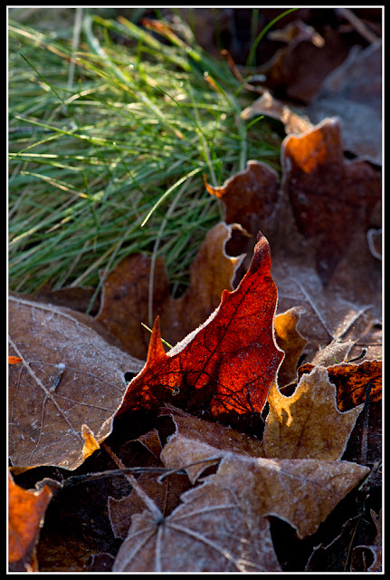 Nova Scotia; Nature; Autumn; Leaves; Frost