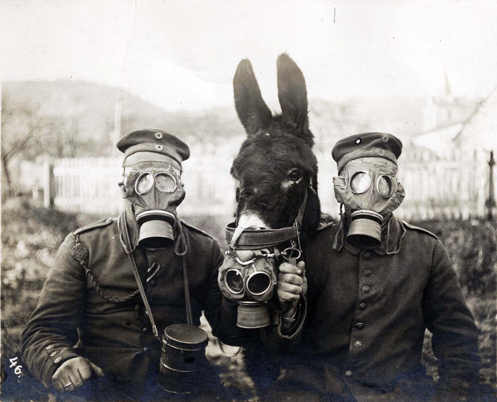 Two German soldiers and their mule wearing gas masks in World War One, 1916