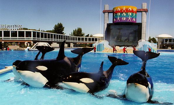Parque SeaWorld San Diego - CityPass