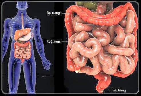 Triệu chứng bệnh viêm đại tràng co thắt...