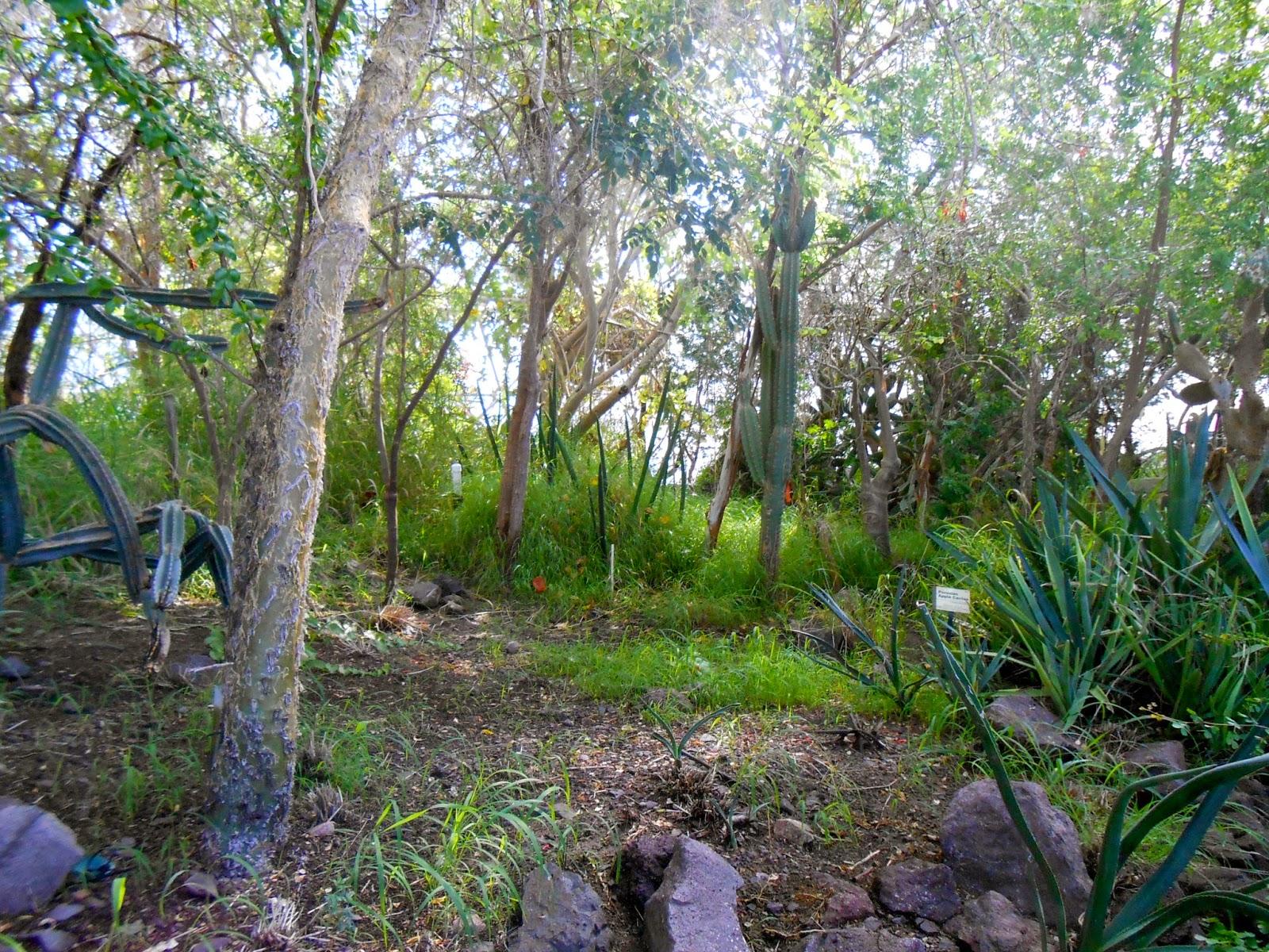 the desert in the biosphere II attraction in oracle arizona