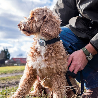 Owner holds the leash of a Labradoodle wearing Sure Petcare's Animo Activity Tracker and Behaviour Monitor