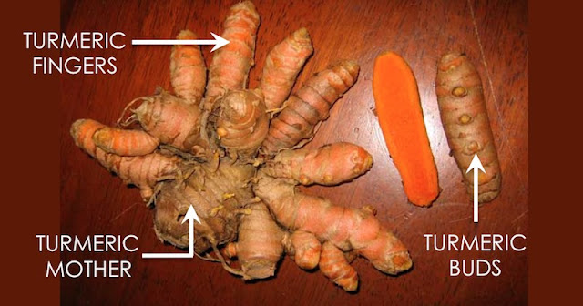 HOW TO GROW TURMERIC AT HOME FOR AN ENDLESS SUPPLY