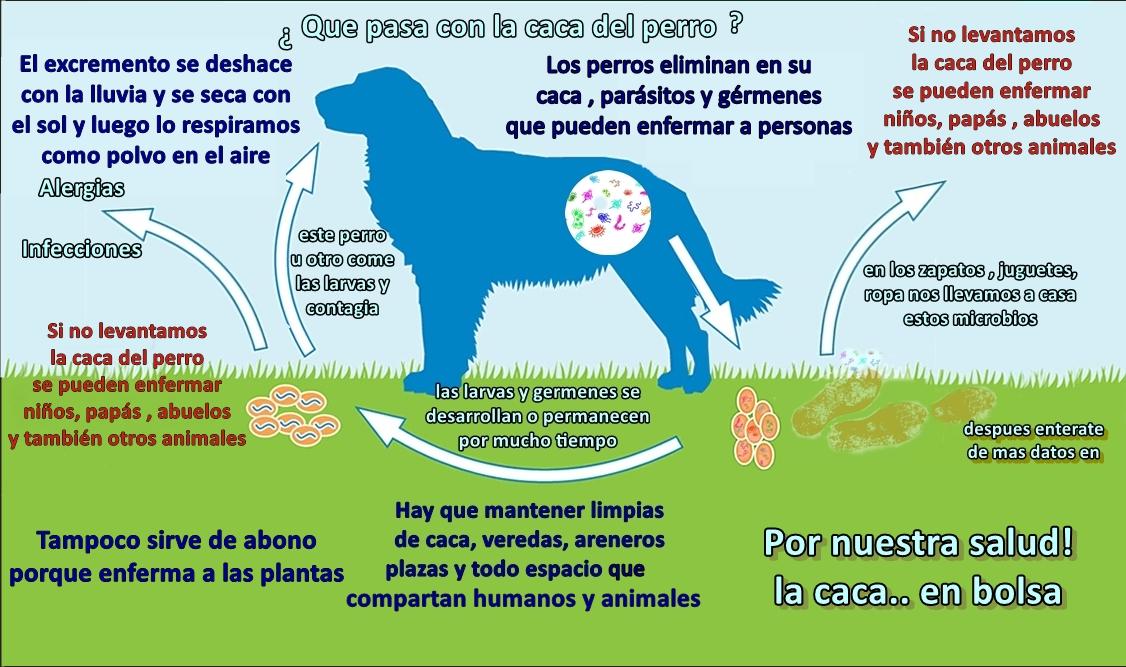 bacterias en la caca de perro