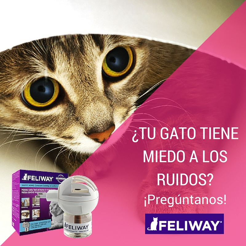 Cuidamos la salud de nuestros gatos con Feliway - Mis Cositas Bonitas