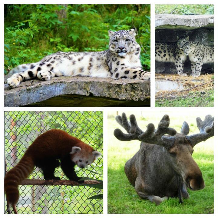 Finlandiya'nın Ähtäri şehrindeki hayvanat bahçesi