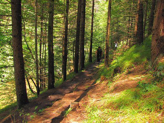 Las przed rozstajem pod Tomašovským výhľadom.